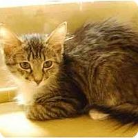 Adopt A Pet :: Scarlett - Modesto, CA
