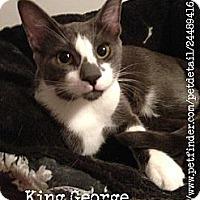 Adopt A Pet :: King George - Vero Beach, FL