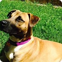 Adopt A Pet :: Atlas - Austin, TX