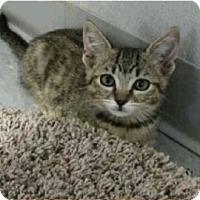 Adopt A Pet :: Princess - Colorado Springs, CO