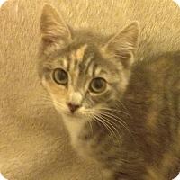 Adopt A Pet :: Holly - Santa Rosa, CA