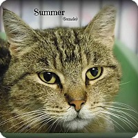 Adopt A Pet :: Summer - Glen Mills, PA