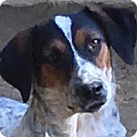 Adopt A Pet :: Specs - Spring Valley, NY