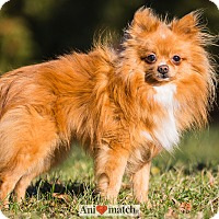 Adopt A Pet :: MAKO - Ile-Perrot, QC