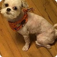 Adopt A Pet :: Kyra - Homer Glen, IL