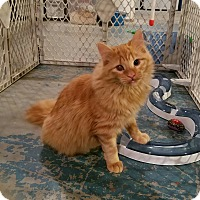 Adopt A Pet :: Sunflower - Geneseo, IL