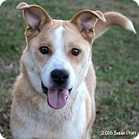 Adopt A Pet :: Truffles - Bedford, VA