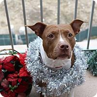 Adopt A Pet :: Sable- ADOPTION PENDING - Warrenville, IL