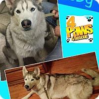 Adopt A Pet :: Toby - Fenton, MO