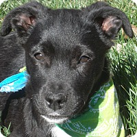 Adopt A Pet :: Derby - Pittsboro, NC