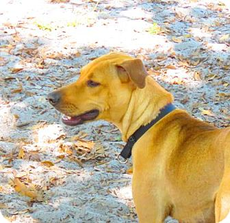 Mixed Breed (Medium) Mix Dog for adoption in Bradenton, Florida - Rory