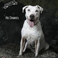 Adopt A Pet :: McDaniel - Acton, CA