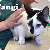 Adopt A Pet :: Tangi - Carencro, LA