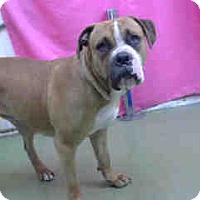 Adopt A Pet :: URGENT 3/27 @ DEVORE - San Bernardino, CA