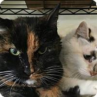 Adopt A Pet :: Sarah - Exton, PA