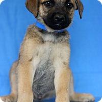 Adopt A Pet :: Michigan - Waldorf, MD