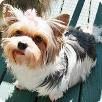 Adopt A Pet :: Joy - Memphis, TN