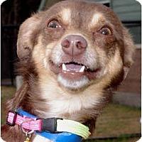 Adopt A Pet :: SUDIE - Georgetown, KY