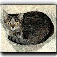 Adopt A Pet :: Ryan - Howell, MI