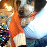 Adopt A Pet :: Baby Edgar - Marlton, NJ