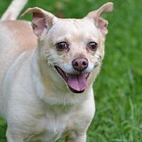 Adopt A Pet :: Bingo - Asheville, NC