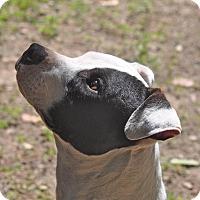 Adopt A Pet :: Archie - Tampa, FL