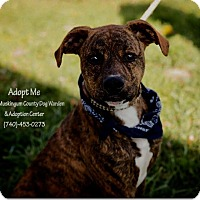 Adopt A Pet :: Kismit - ADOPTED! - Zanesville, OH