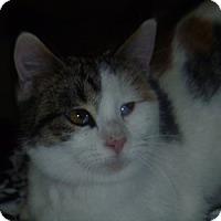Adopt A Pet :: Addy - Hamburg, NY