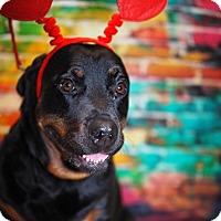Adopt A Pet :: Sofia - Whitehall, PA