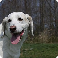Adopt A Pet :: Barry A34975863 - Westampton, NJ