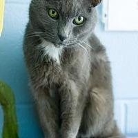 Adopt A Pet :: CeCe - Evansville, IN