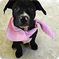 Adopt A Pet :: Estonia super snuggly - Sacramento, CA