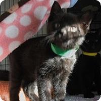 Adopt A Pet :: Hippy Chick - Shelton, WA