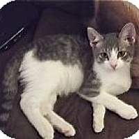 Adopt A Pet :: K-Sabrina1-Tigger - Colorado Springs, CO