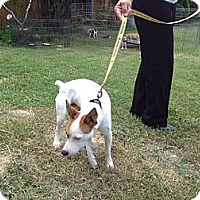 Adopt A Pet :: Emil in Sealy - Houston, TX