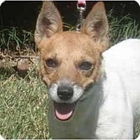 Adopt A Pet :: Found Female Houston - Houston, TX