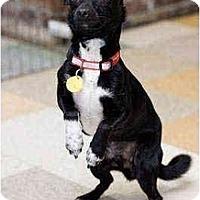 Adopt A Pet :: Skippy - Portland, OR