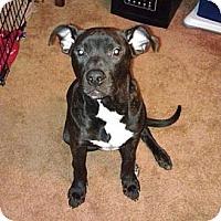 Adopt A Pet :: Rhys - Elderton, PA