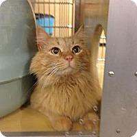 Adopt A Pet :: King - Monroe, GA