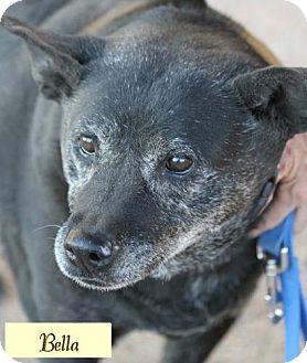 Labrador Retriever Mix Dog for adoption in Cedar Crest, New Mexico - Bella
