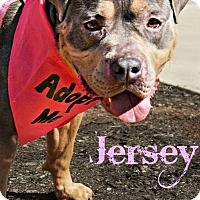 Adopt A Pet :: Jersey - Roanoke, VA