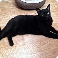 Adopt A Pet :: Offered by Owner - 'Tuesday' Sweet Male - HILLSBORO, OR