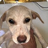 Adopt A Pet :: Dobey - Folsom, LA
