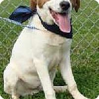 Adopt A Pet :: Bubba - Aurora, IL