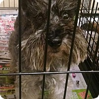 Adopt A Pet :: Ritz - Pembroke, GA