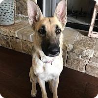 Adopt A Pet :: Princess - Austin, TX