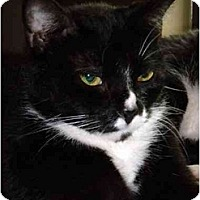 Adopt A Pet :: Sue Sue - Orlando, FL