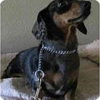 Adopt A Pet :: Roxie - Sun Valley, CA