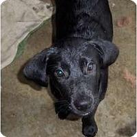 Adopt A Pet :: Zack - In CT! - Adamsville, TN