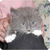 Adopt A Pet :: Roy - Clementon, NJ